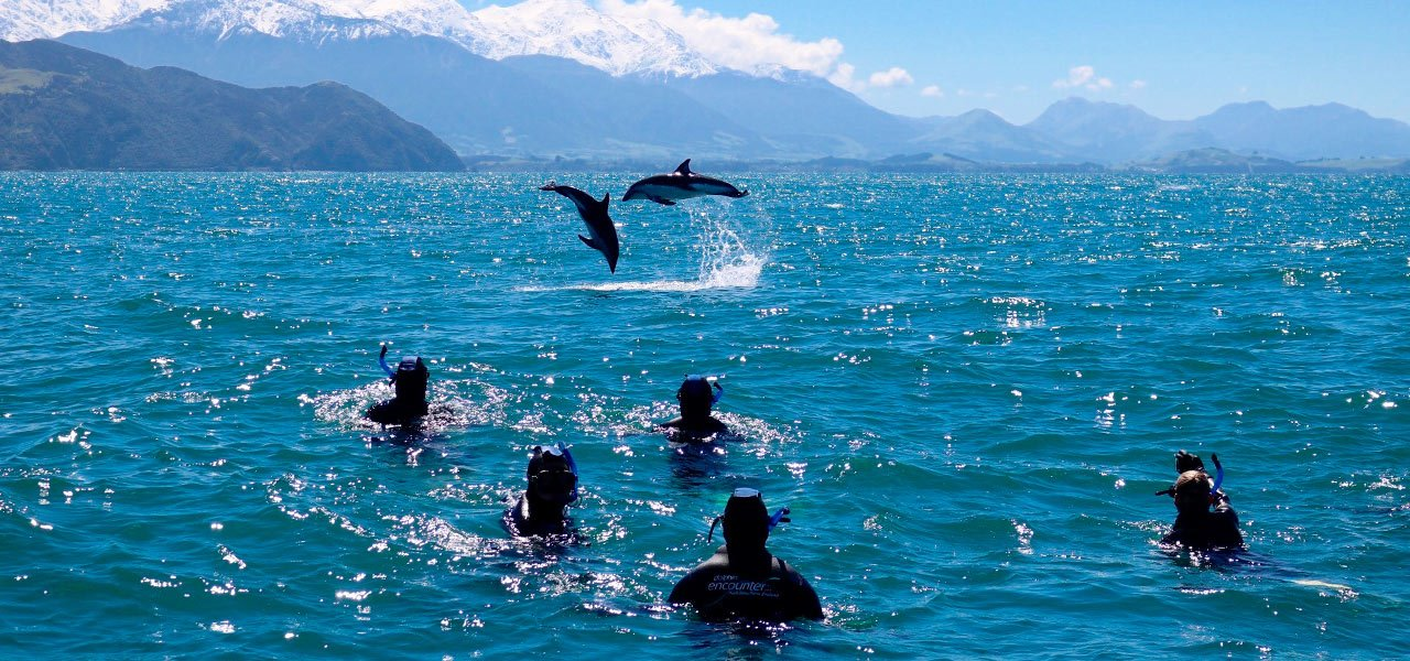 New Zealand_Kaikoura_delfiner